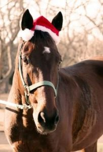 Horse-with-santa-hat